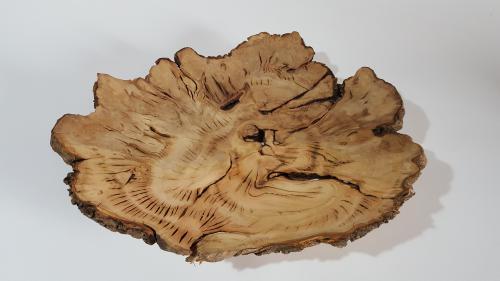 חריטה בעץ - שורש זית